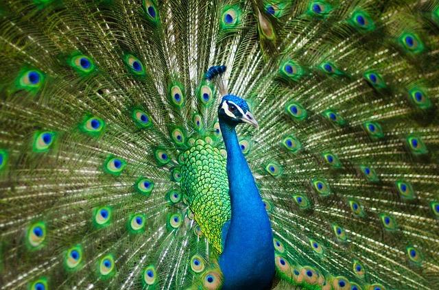 Miami Zoo - BillLentis.com