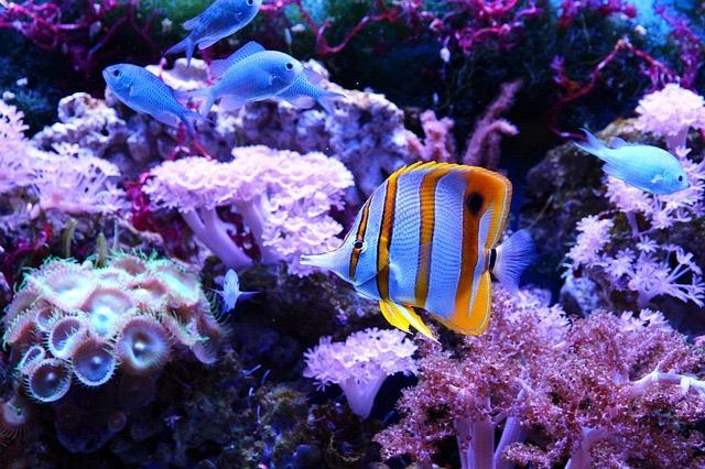 Miami FL Sea Aquarium - BillLentis.com