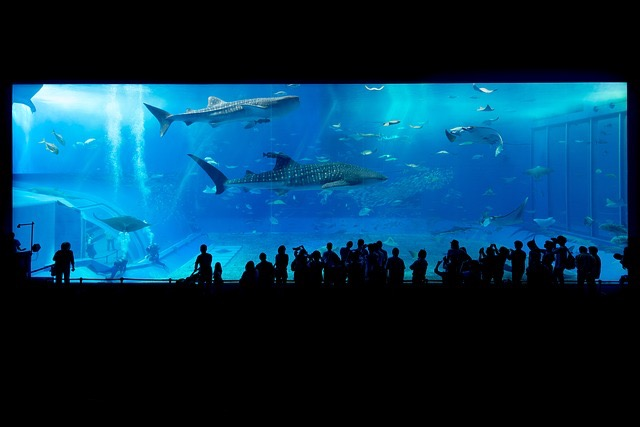 Miami Sea Aquarium - BillLentis.com