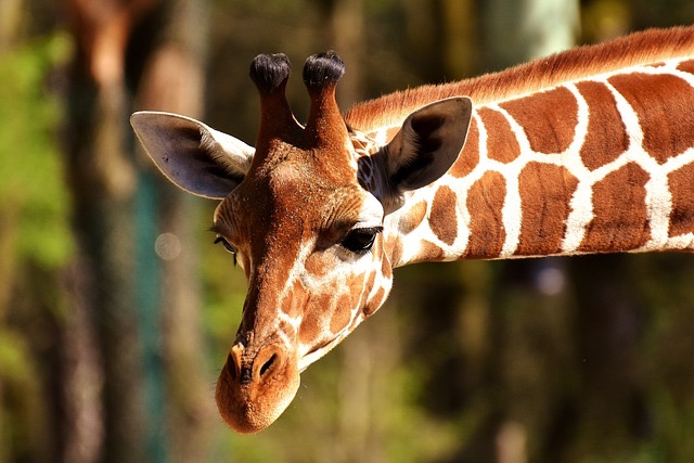 Zoo Miami FL - BillLentis.com