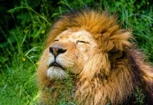Best Zoo Near Boston, MA - Bill Lentis Media