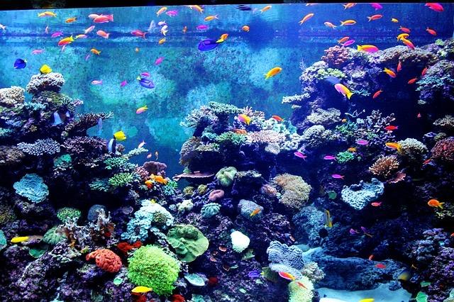 Review Of Boston Aquarium - Bill Lentis Media