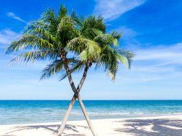 Things To Do In Homestead, FL - Bill Lentis Media