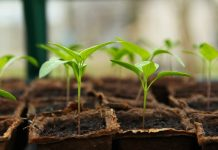 Backyard Vegetable Garden - Bill Lentis Media