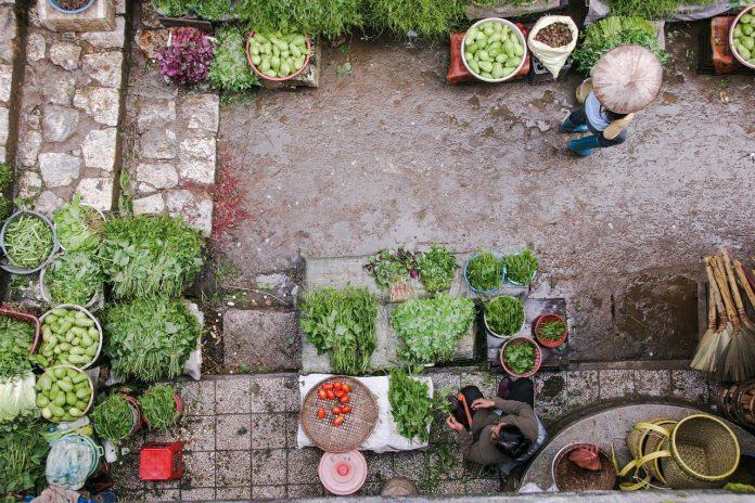 Best Vegetables For Container Gardening - Bill Lentis Media