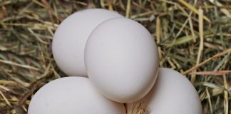 Can You Beat Egg Whites In A Blender - Bill Lentis Media