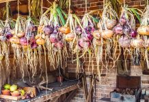 Hanging Vegetable Garden - Bill Lentis Media
