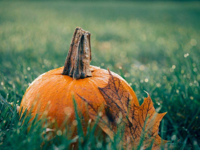 How To Make Pumpkin Soup With A Blender - Bill Lentis Media