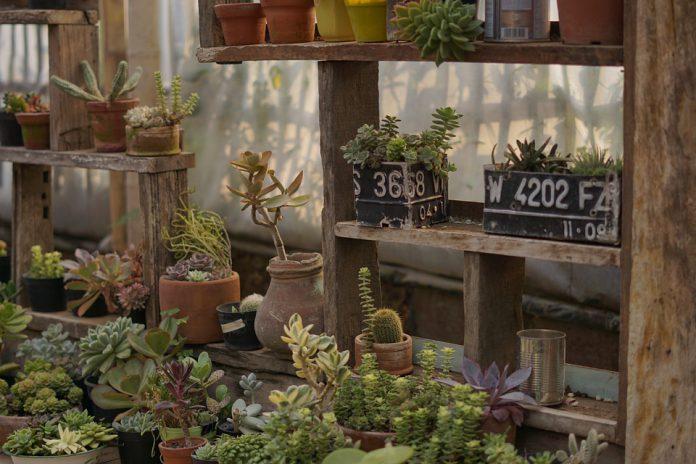 Potted Vegetable Garden - Bill Lentis Media
