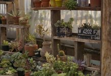 Potted Vegetable Garden - Bill Lentis Media