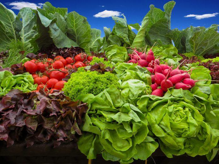 Raised Bed Vegetable Gardening For Beginners - Bill Lentis Media