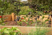 Raised Vegetable Garden - Bill Lentis Media