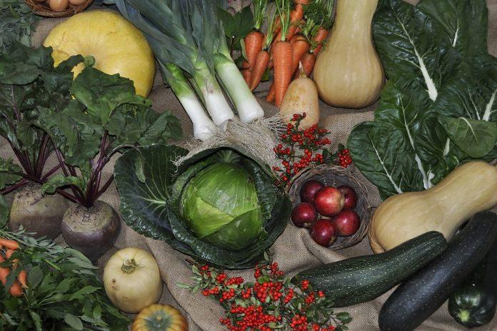 Summer Vegetable Garden - Bill Lentis Media