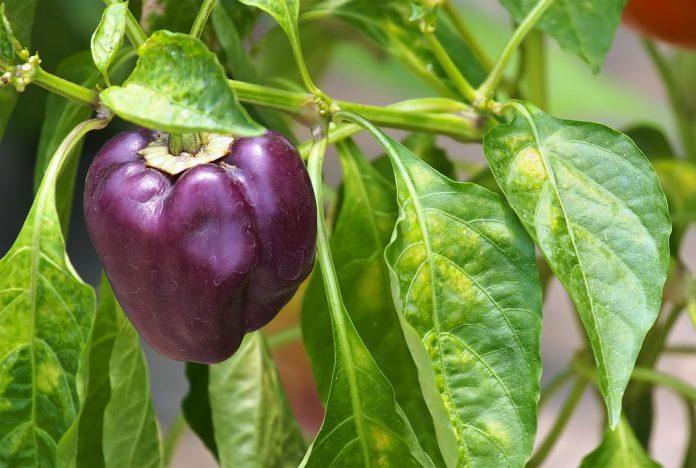 Vegetable Container Gardening For Beginners - Bill Lentis Media