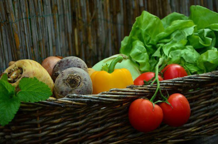Vegetable Garden - Bill Lentis Media