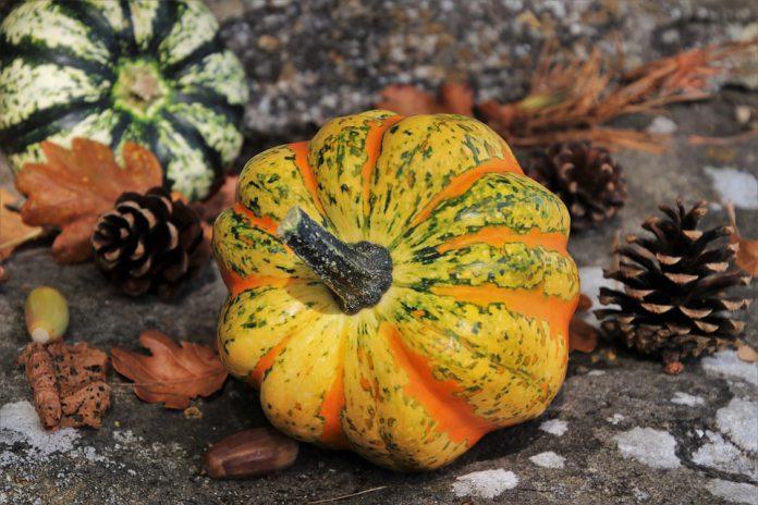 Vegetable Garden Pictures - Bill Lentis Media