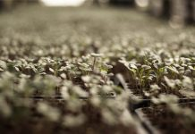 DIY Vegetable Garden - Bill Lentis Media