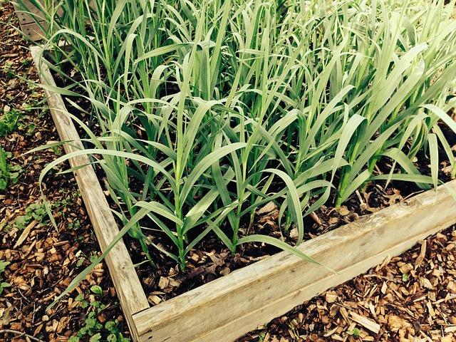 Vegetable Garden Box -- Bill Lentis Media